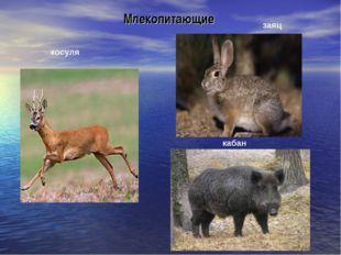 Млекопитающие косуля заяц кабан