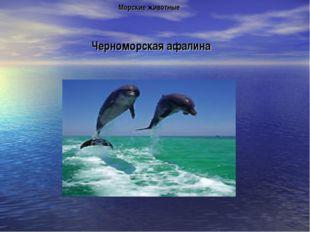 Черноморская афалина Морские животные