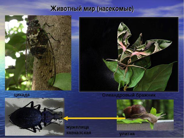 Животный мир (насекомые) цикада Олеандровый бражник жужелица кавказская улитка