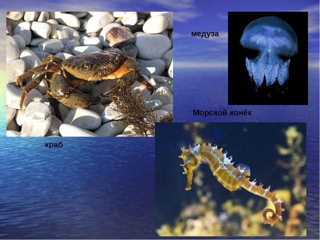 краб Морской конёк медуза