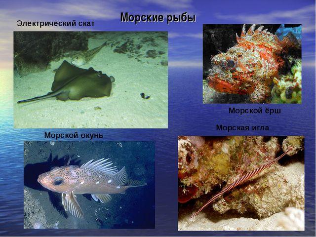 Морские рыбы Электрический скат Морская игла Морской ёрш Морской окунь