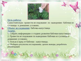 Цель работы: Самостоятельно провести исследование по выведению бабочки из гу