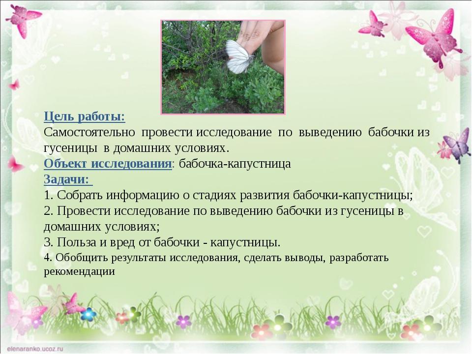 Цель работы: Самостоятельно провести исследование по выведению бабочки из гу...