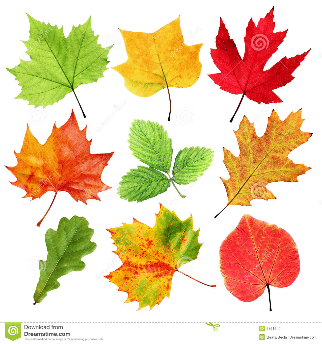 http://thumbs.dreamstime.com/z/colorful-leaves-5761642.jpg