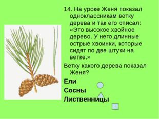 14. На уроке Женя показал одноклассникам ветку дерева и так его описал: «Это
