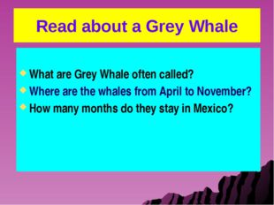Read about a Grey Whale What are Grey Whale often called? Where are the whale