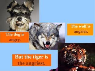The dog is The wolf is But the tiger is the angriest. angry. angrier.