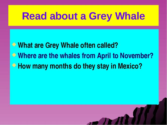 Read about a Grey Whale What are Grey Whale often called? Where are the whale...
