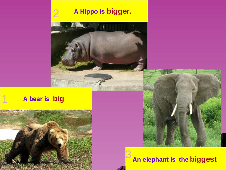 A bear is big . A Hippo is bigger. An elephant is the biggest. 1 2 3