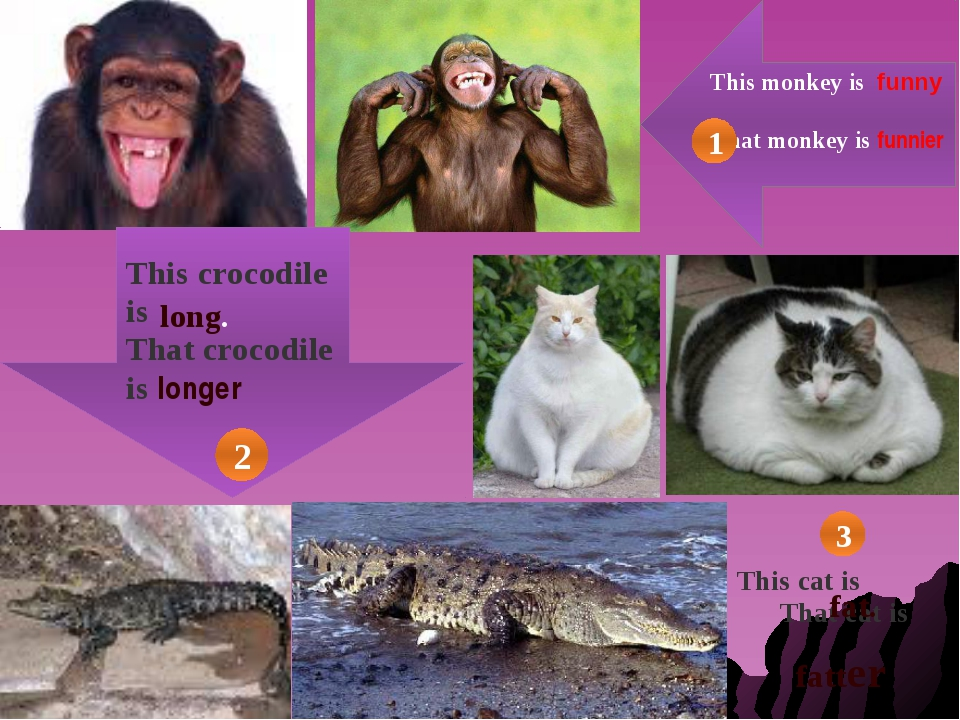 This monkey is funny That monkey is funnier This crocodile is That crocodile...