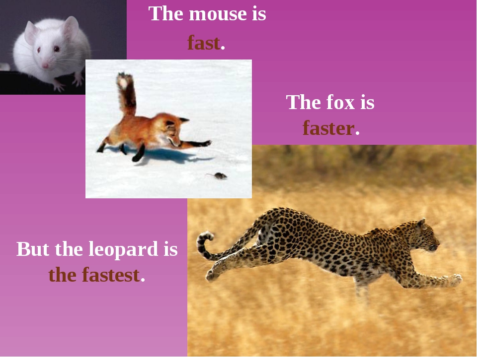 The mouse is The fox is But the leopard is the fastest. fast. faster.