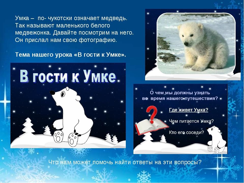 Умка – по- чукотски означает медведь. Так называют маленького белого медвежон...