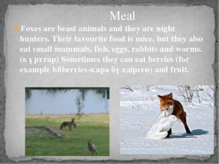 Foxes are beast animals and they are night hunters. Their favourite food is m
