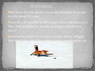Wild foxes live for about 6 years and domestic foxes can live for about 10 ye