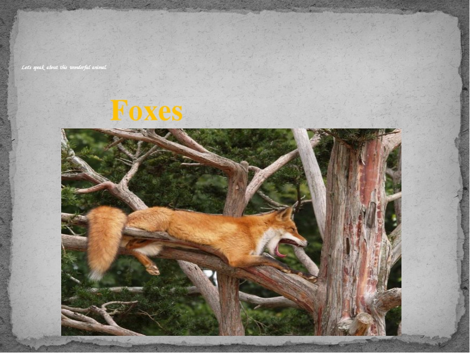 Foxes Let's speak about this wonderful animal.