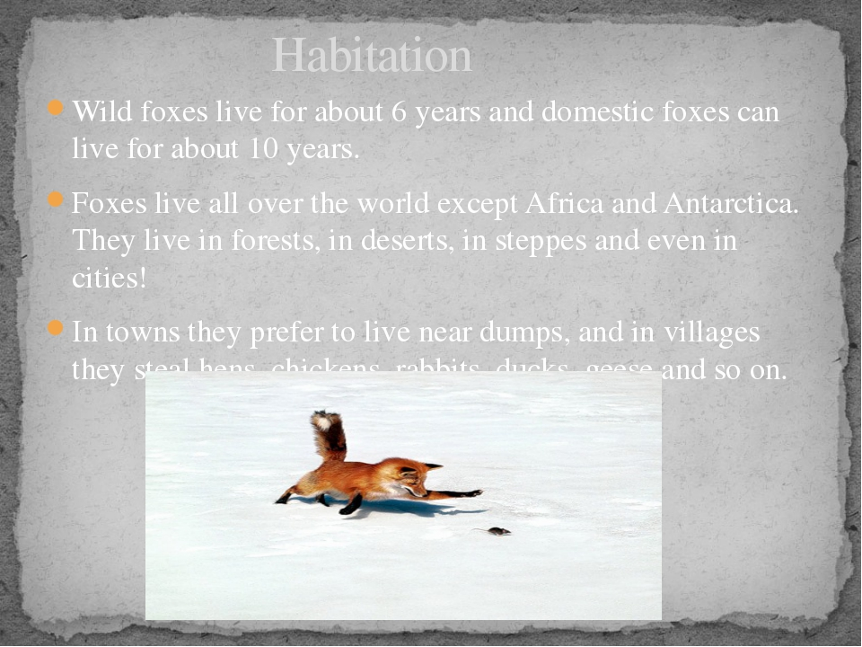 Wild foxes live for about 6 years and domestic foxes can live for about 10 ye...