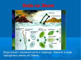 Вода играет огромную роль в природе. Именно в воде зародилась жизнь на Земле.
