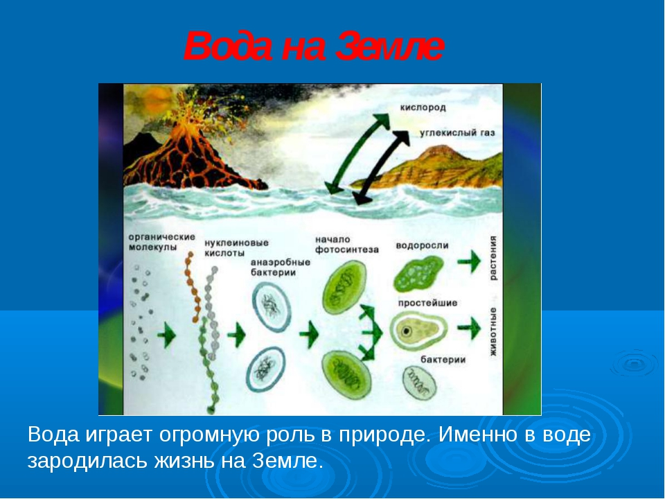 Вода играет огромную роль в природе. Именно в воде зародилась жизнь на Земле....