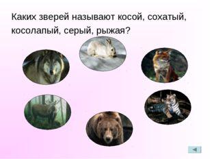 Каких зверей называют косой, сохатый, косолапый, серый, рыжая?