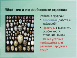 Яйцо птиц и его особенности строения Работа в группах: Теоретики (работа с та