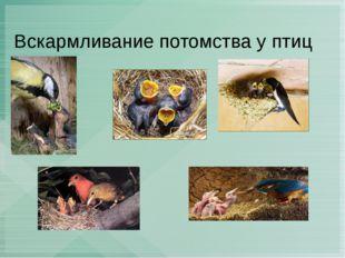 Вскармливание потомства у птиц