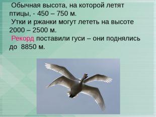 Обычная высота, на которой летят птицы, - 450 – 750 м. Утки и ржанки могут л