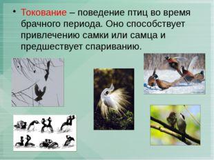 Токование – поведение птиц во время брачного периода. Оно способствует привле