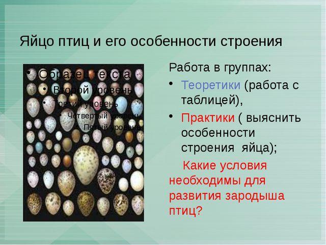 Яйцо птиц и его особенности строения Работа в группах: Теоретики (работа с та...