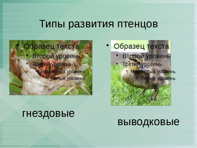 Типы развития птенцов гнездовые выводковые