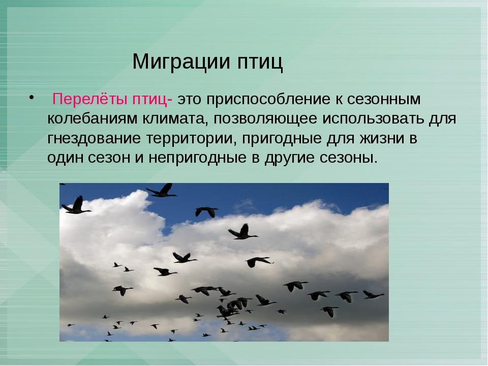 Миграции птиц Перелёты птиц- это приспособление к сезонным колебаниям климат...