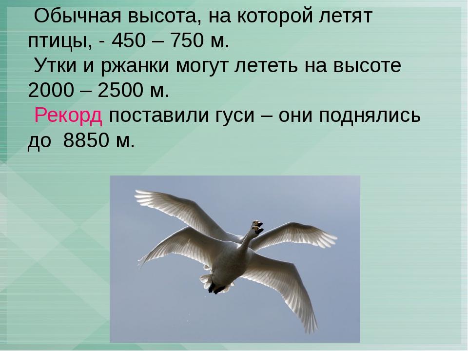 Обычная высота, на которой летят птицы, - 450 – 750 м. Утки и ржанки могут л...