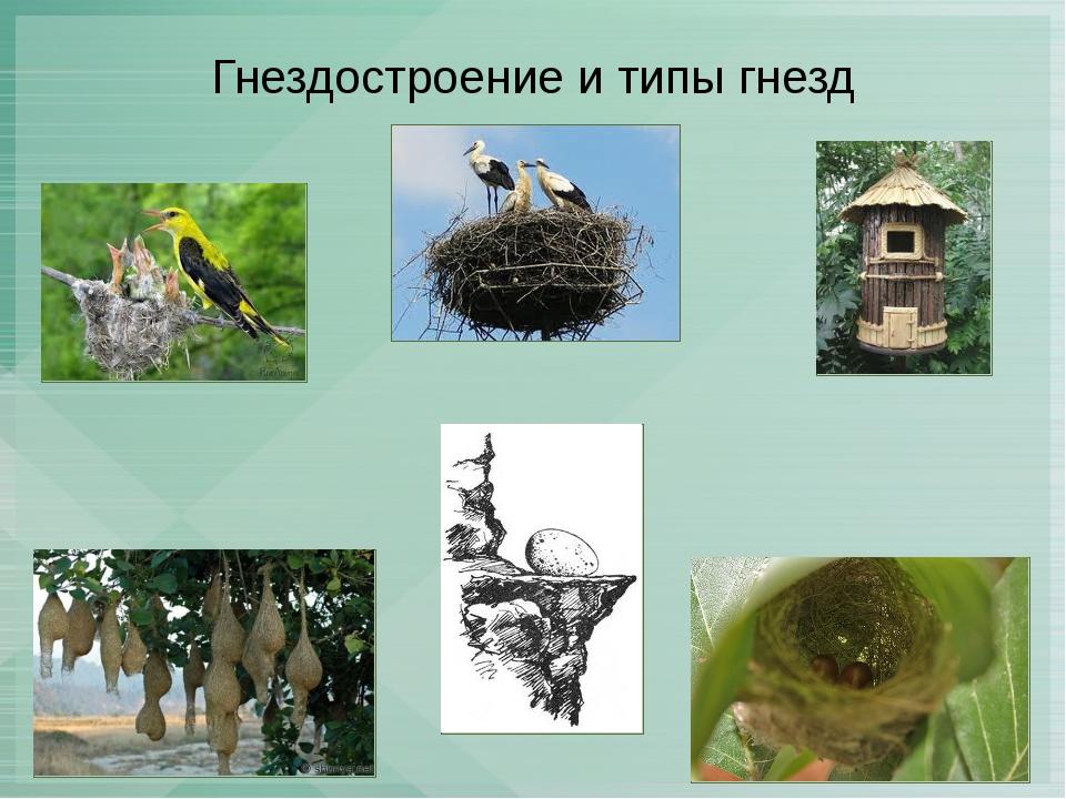 Гнездостроение и типы гнезд
