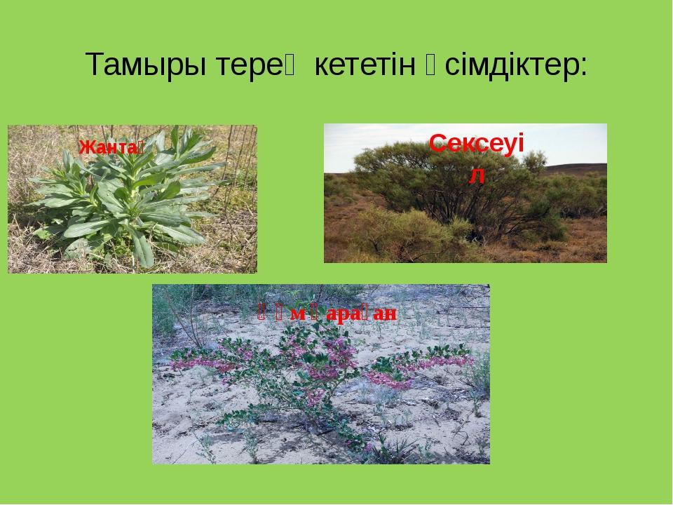 Тамыры терең кететін өсімдіктер: Сексеуіл Жантақ Құм қараған