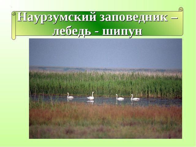 Наурзумский заповедник – лебедь - шипун