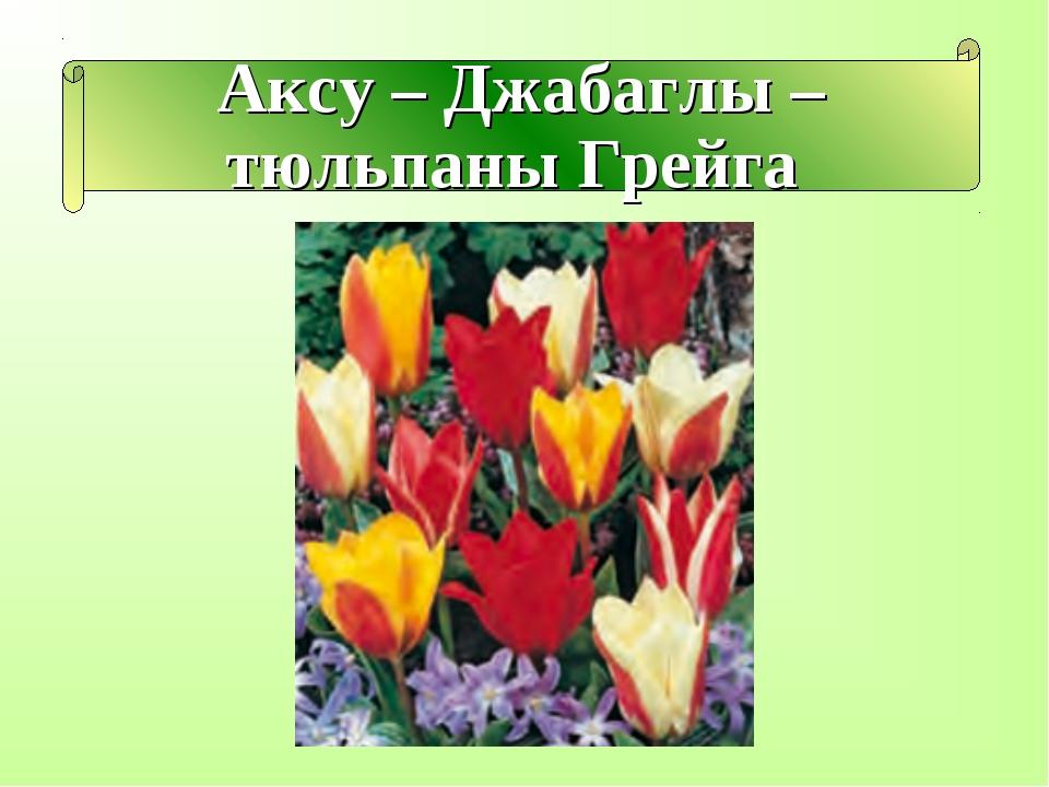 Аксу – Джабаглы – тюльпаны Грейга