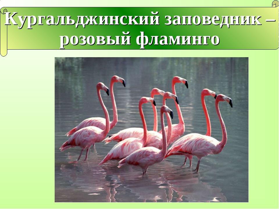 Кургальджинский заповедник – розовый фламинго