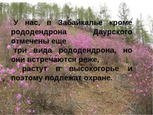 У нас, в Забайкалье кроме рододендрона Даурского отмечены еще три вида рододе