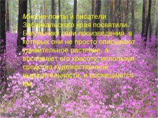 Многие поэты и писатели Забайкальского края посвятили Багульнику свои произве
