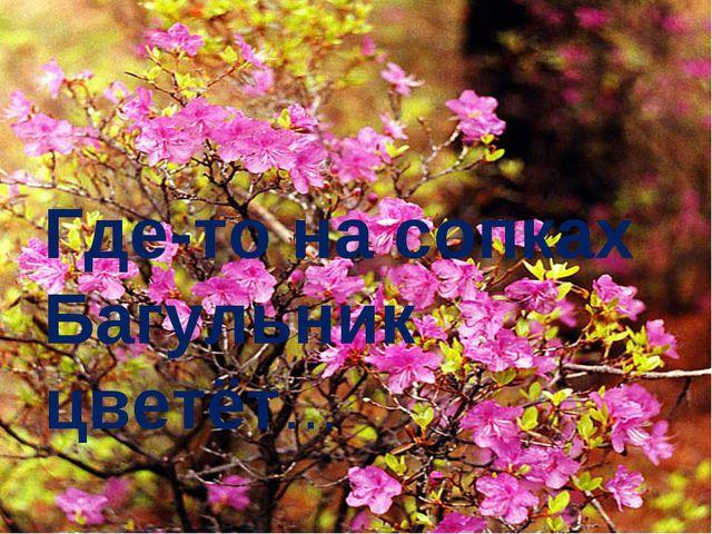 Где-то на сопках Багульник цветёт…