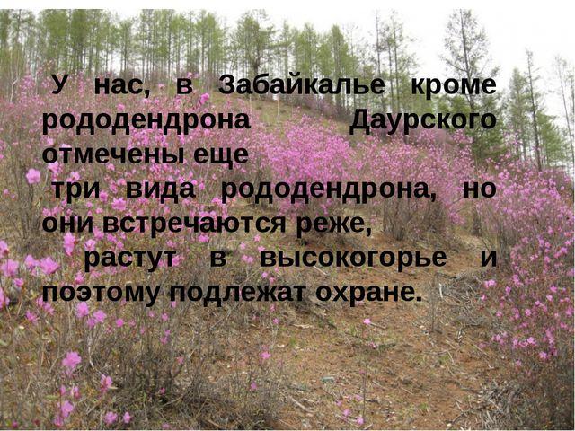 У нас, в Забайкалье кроме рододендрона Даурского отмечены еще три вида рододе...