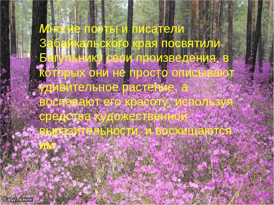 Многие поэты и писатели Забайкальского края посвятили Багульнику свои произве...