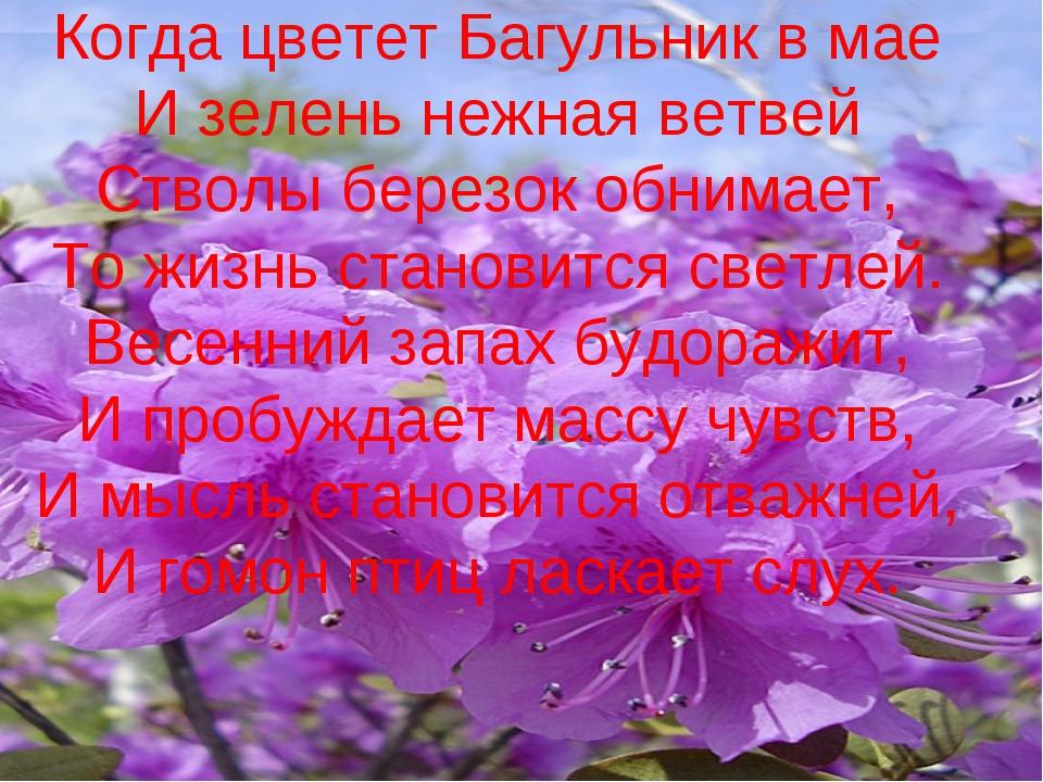Когда цветет Багульник в мае И зелень нежная ветвей Стволы березок обнимает,...