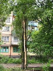 http://upload.wikimedia.org/wikipedia/ru/thumb/8/87/Lightning_damage_to_tree_in_Makeevka_Ukraine_2008.jpg/180px-Lightning_damage_to_tree_in_Makeevka_Ukraine_2008.jpg