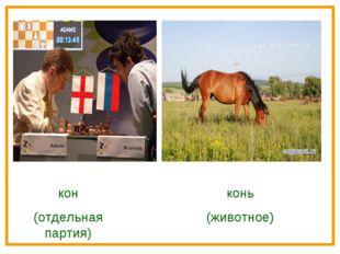 кон (отдельная партия) конь (животное)