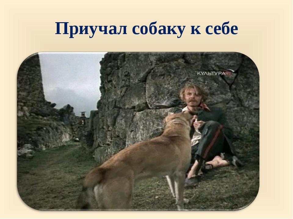 Приучал собаку к себе