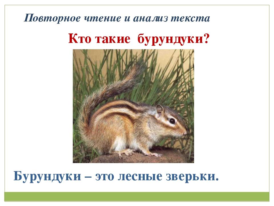 Повторное чтение и анализ текста Кто такие бурундуки? Бурундуки – это лесные...
