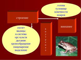 строение внешнее голова туловище конечности покров скелет мышцы н.система орг