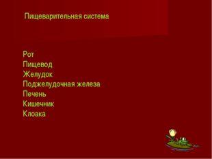 Рот Пищевод Желудок Поджелудочная железа Печень Кишечник Клоака Пищеварительн
