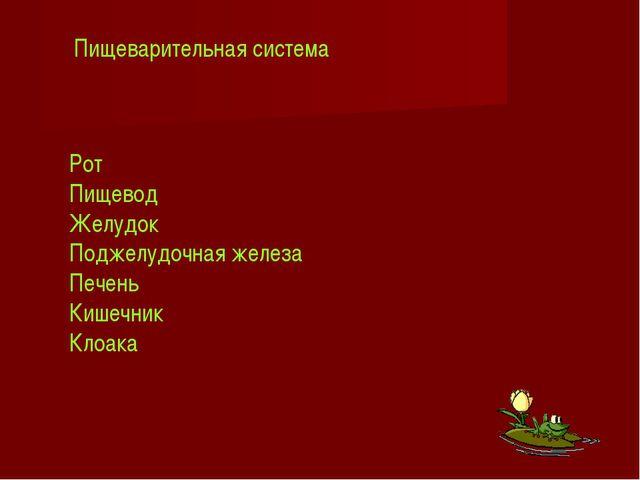 Рот Пищевод Желудок Поджелудочная железа Печень Кишечник Клоака Пищеварительн...