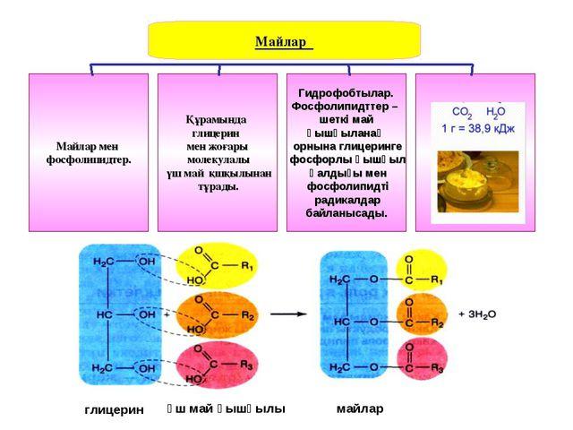 Майлар Майлар мен фосфолипидтер. Құрамында глицерин мен жоғары молекулалы үш...